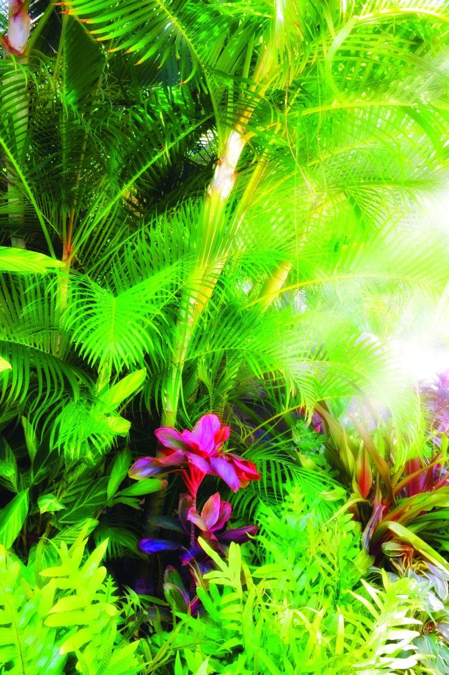 Zdrave šume za ljepši svijet