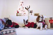 Božićna moda za kućne ljubimce