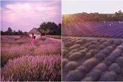 Pronašli smo najljepšu Instagramsku kulisu: Polje lavande u istarskom izletištu Pekici pravi je mali raj