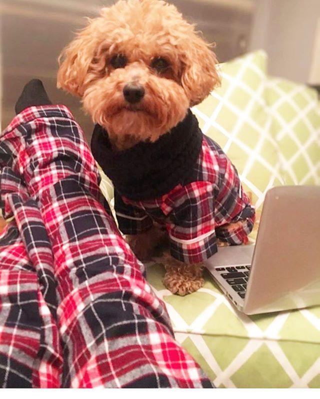 Od sad i vaš kućni ljubimac može nositi pidžamu koja je uparena s vašom!