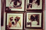 Glamurozni životi pasa slavnih osoba