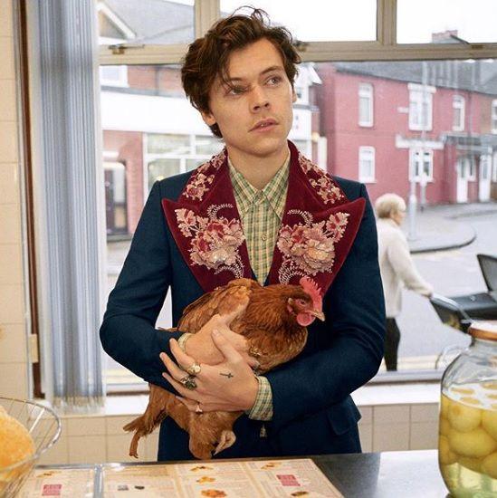 Harry Styles u novoj kampanji pozira s - psima i kokošima! Pa ništa manje nismo ni očekivali od Guccija