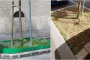 Napravili najljepši vrt u Zagrebu pa dobili kaznu 900 kuna: 'Idemo na Prekršajni sud tražiti pravdu'