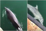 Jedan od ljepših prizora koje ćete danas vidjeti: Dupini plivaju u talijanskoj luci Cagliari