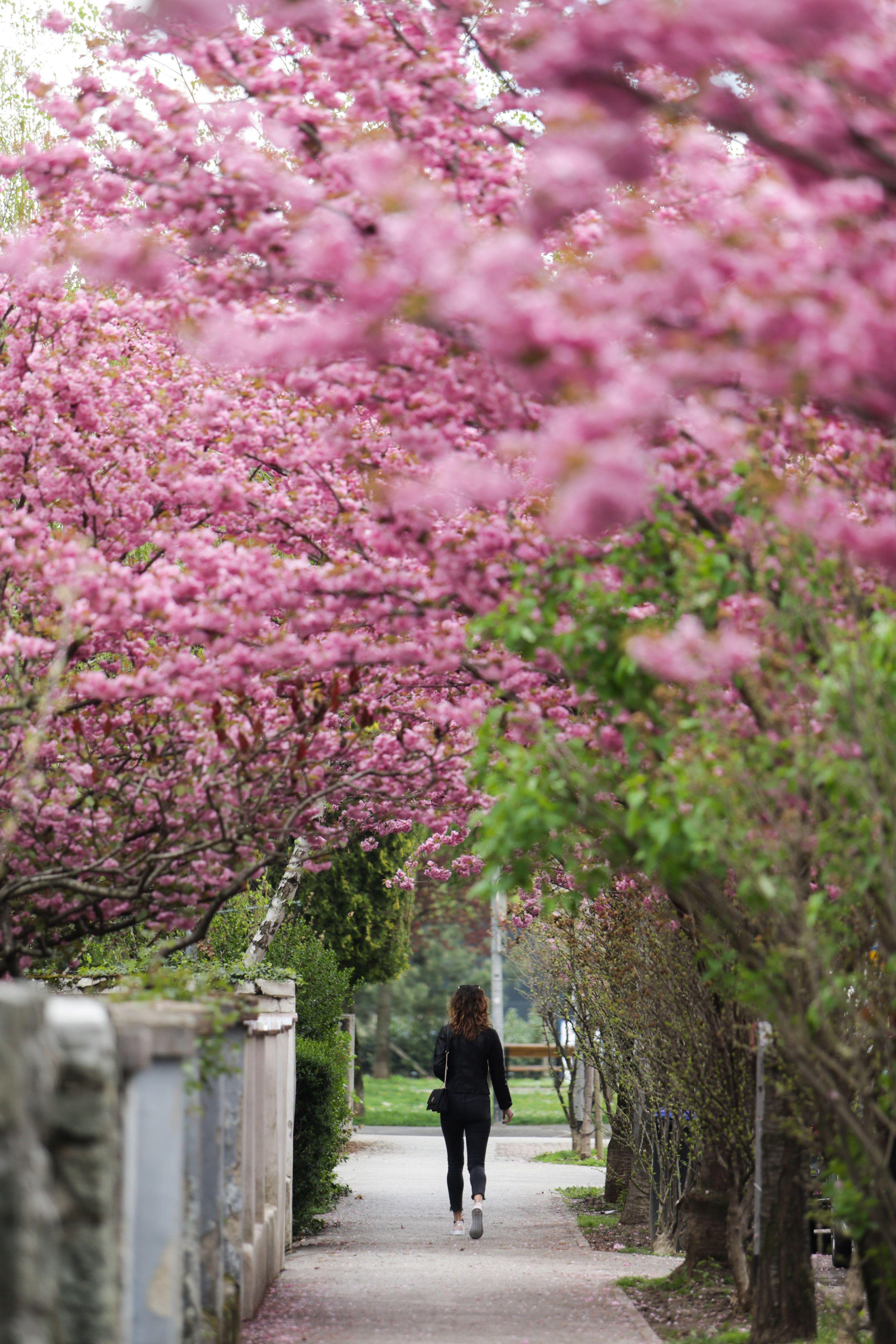 U proljeće ova zagrebačka ulica postaje - najljepša, a i omiljeno je mjesto za fotkanje!