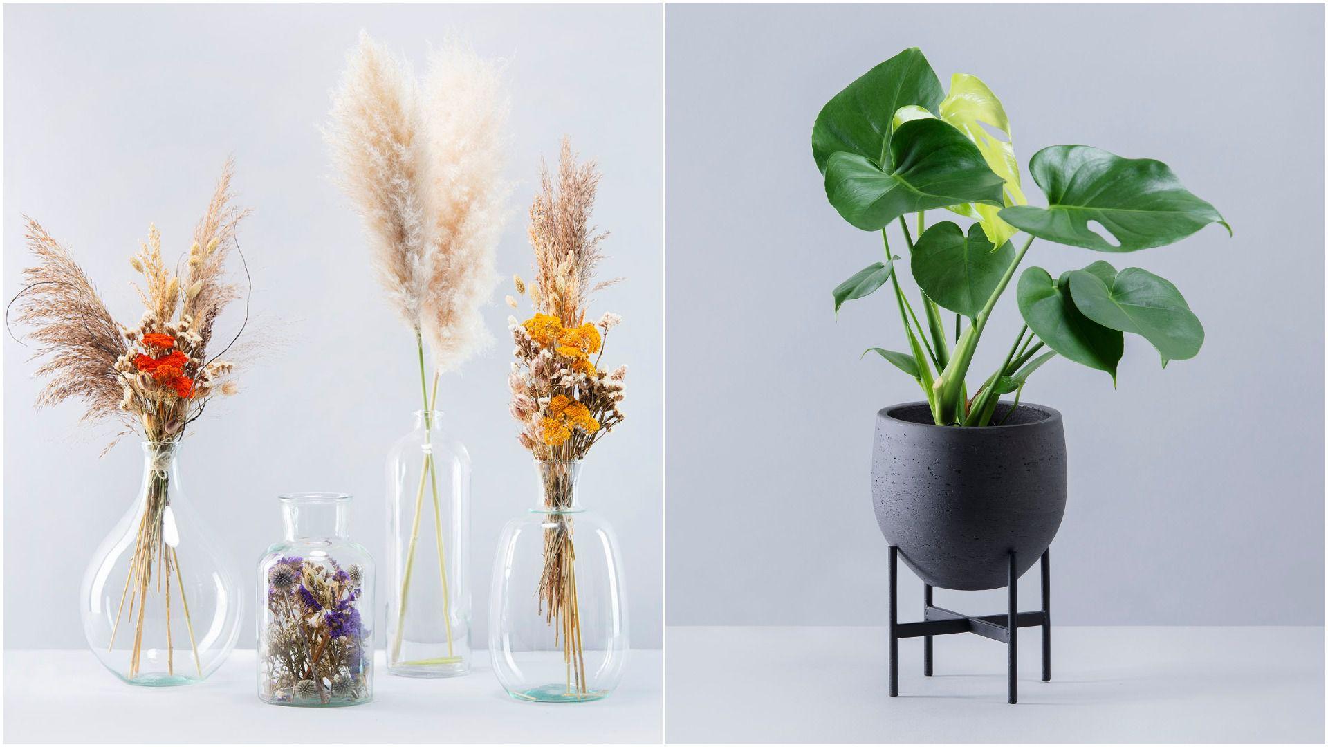 Biljkoljupci, pozor! Hortiart Home predstavio je novu kolekciju sa suhim cvijećem, a ima i odličan rođendanski popust